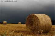 c21_608109_rollen_fb1.jpg