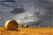 c21_608179_stroh_fb.jpg
