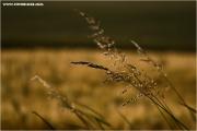 c21_725822_gras_fb.jpg