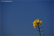 m3_109698_raps_fb.jpg