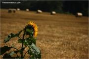 m3_932679_rollen_fb.jpg