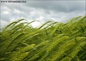 natur01.jpg