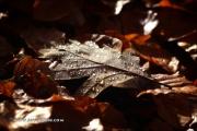 100D_152652_blatt_fb
