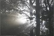 c20_552721_licht_fb.jpg