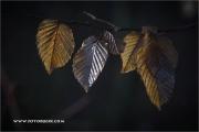m5_192283_blatt_fb