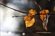m5_192284_blatt_fb