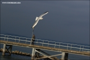 d100_159570_bodensee_fb