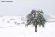 m3_102843_baum_fb.jpg
