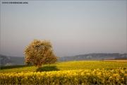 m3_115552_baum_fb.jpg