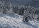 c20_630328_winterwald_fb.jpg