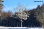 d100_165215_winter_fb