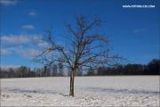 d100_165240_winter_fb