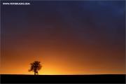 d600_133578_sa_fb.jpg