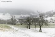 c21_749322_winter_fc