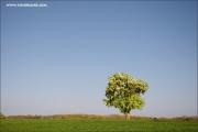m3_115660_baum_fb.jpg