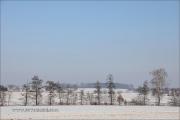Baumreihe im Winter auf der Hohenloher Ebene