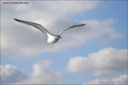 m3_105812_texel_fb.jpg