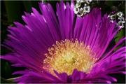 c21_p03a0020_bluete_fb.jpg
