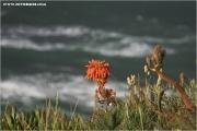 c21_p23m0820_kaktus_fb.jpg