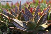 c21_p01a1376_kaktus_fb.jpg