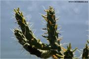 c21_p31m0654_kaktus_fb.jpg