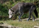 c20_549807_wolf_fb.jpg