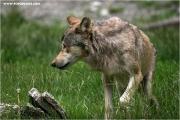 c21_727668_wolf_fb.jpg