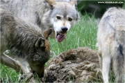 c21_727721_wolf_fb.jpg