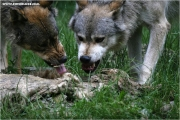 c21_727770_wolf_fb.jpg