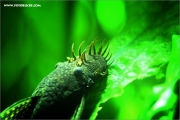 m3_102777_aquarium_fb.jpg