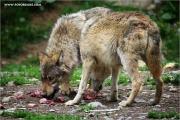 m3_923925_wolf_fb.jpg