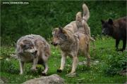 m3_924015_wolf_fb.jpg