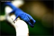 m3_940283_blau_fb.jpg