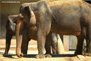 m3_102247_elefant_fb.jpg