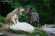 m3_923809_wolf_fb.jpg
