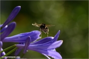 13_138973_lilie_fb.jpg
