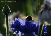 c20_535584_biene_fb.jpg