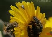 c20_537342_biene_fb.jpg