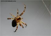 c20_544138_spinne_fb.jpg