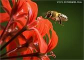 c20_544938_biene_fb.jpg