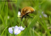 c20_638804_hummel_fb.jpg