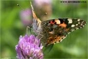 c21_605626_schmetterling_fb.jpg