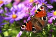 c21_616101_schmetterling_fb.jpg