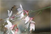 c21_616131_biene_fb.jpg
