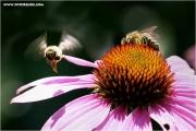 c21_730970_biene_fb.jpg