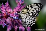 d600_137893_schmetterling_fb.jpg