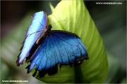 d600_137937_schmetterling_fb.jpg
