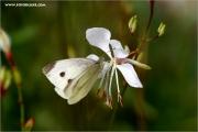 m3_110901_schmetterling_fb.jpg
