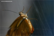 m3_115890_schmetterling_fb.jpg