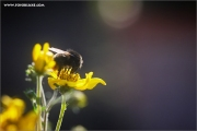 m3_118948_hummel_fb.jpg